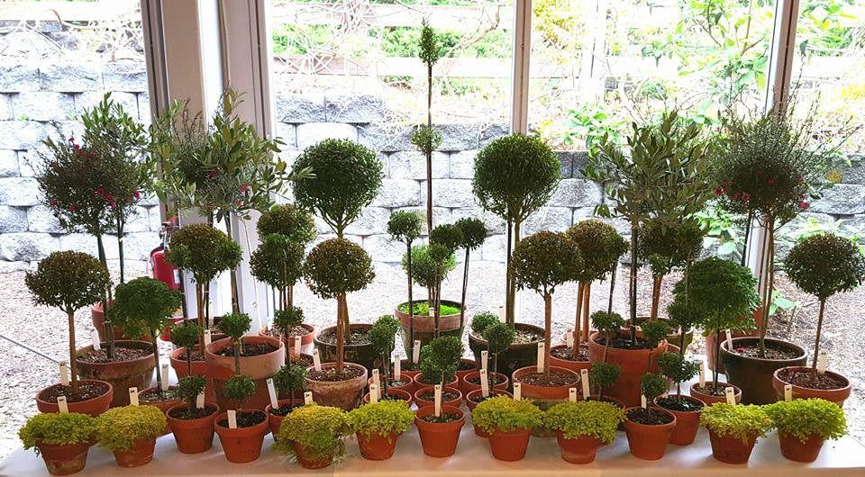 Topiary Workshop at Jacobus Vanderveer House