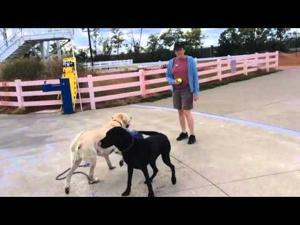 Suffoletta Family Aquatic Center goes to the dogs