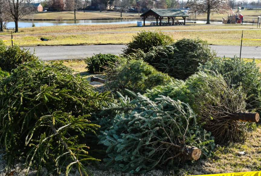 Tossing Out Tradition How To Recycle Your Real Christmas