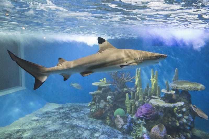 Aquarium Of Niagara Celebrating The 39 716 39 Local News