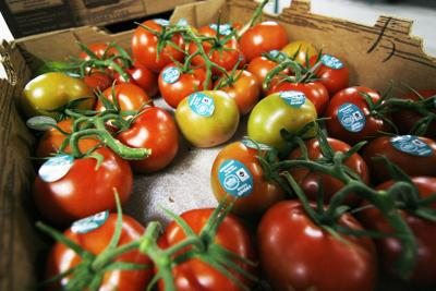 Local importers 'disappointed' as U.S. pulls out of pricing deal on Mexican tomatoes | Nogales International