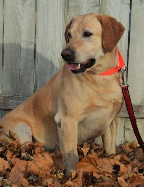 Adopt A Senior Dog Chicago