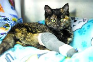 Woman rescues a kitten found frozen to drain