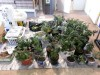Portage police discover marijuana growing operation