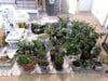 Portage police discover marijuana growing operation