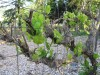 Growing grapes can take time, attention