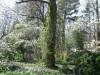 Vine-Covered Trees