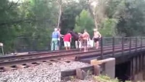 Pregnant horse rescued from railroad bridge