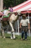 From alpaca to zebu, see it at the fair