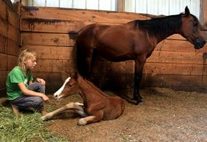 Rescued horse delivers healthy filly