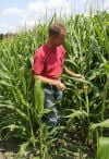 Rains wash away hopes of good corn crop in NWI