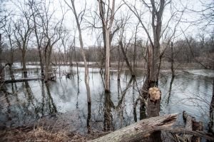 Grassroots effort could revive Grand Kankakee Marsh
