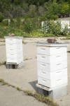 City Hives
