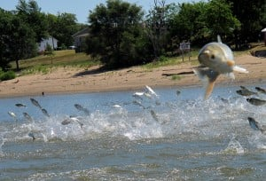 Study: Physical, electric barriers best Asian carp defenses