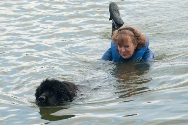 how to train a newfoundland for water rescue