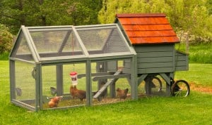 Innovative chicken coops can give a yard some chic