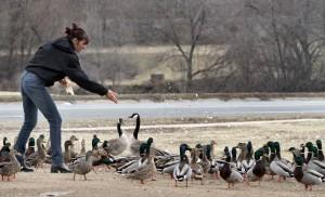 Feeding the fowl