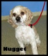 Pet of the week: Nugget