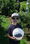 Blueberry season sticks around