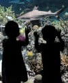 National Aquarium overhaul creates coral ecosystem