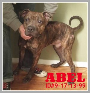 Pet of the week: Abel