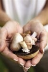 Hotel puts luxury twist on mushroom-hunting trips