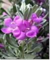 Herbal Healer What is sage?