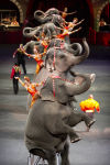 Ringling Bros. and Barnum & Bailey Elephants