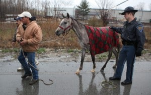 Gallery: Horse saved from scary situation on I-65