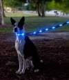 Dog-E-Glow Collar and Leash