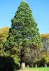 Gardening-Big Trees