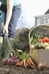 Family garden reaps more than vegetables on the table