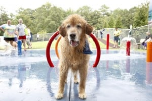 Berkus joins team for fantasy dog parks