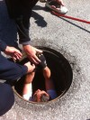 Portage employees rescue ducklings from storm drain