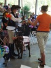 Youngsters and their pets compete in 4-H Dog Show
