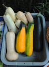 A Munster gardener shares his abundant yield of fruits and vegetables