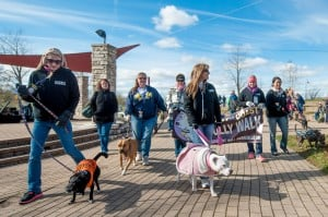 Pit bulls put their best paw forward at Chesterton walk