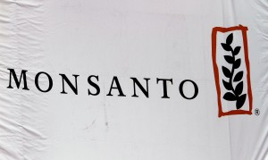 Monsanto: Modified wheat 'isolated occurrence'