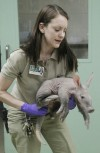 Chicago-area zoo heralds birth of aardvark