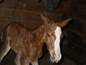 Horse gives birth after rescue from railroad bridge