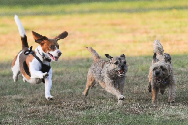 Portage Wi Dog Park