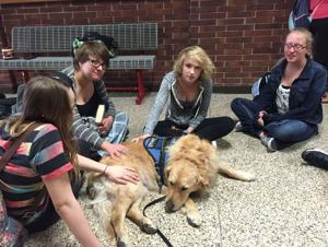 Comfort dog teaches students how to treat others