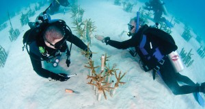 Divers volunteer on coral restoration in Fla. Keys