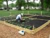 Hobart's community garden ...