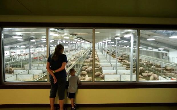 Fair Oaks Farms Latest Innovation Goes Hog Wild