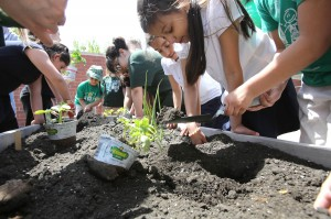Nathan Hale Elementary students plant teaching garden