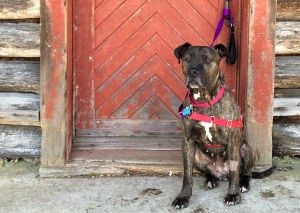 Calmer, potty-trained old dogs find new homes