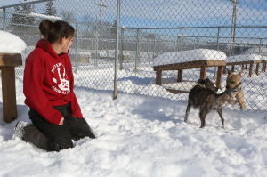 Consistency is key to keeping pets safe from the cold