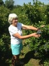 Blueberry Farm Wife Wanda Bonnell Showing the August 2013 Late Berry Bounty in North Judson