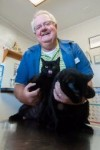 Hammond vet comes to the rescue of cats